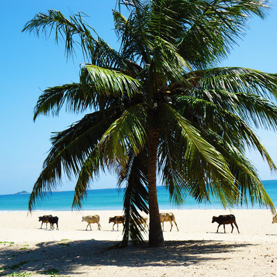Beaches of southern Sri Lanka