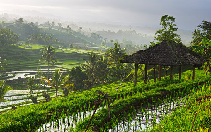 Rice paddy at sunrise, Bali, Indonesia
